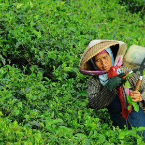 give-microfinance